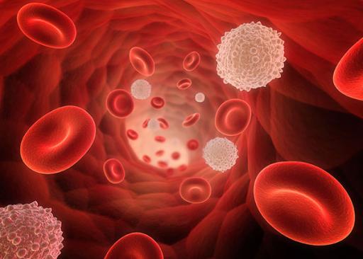 Лейкоциты и эритроциты