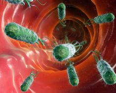 Бактерии в легких