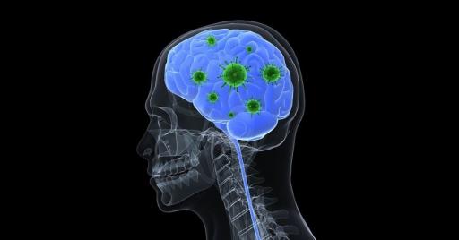 Токсины микобактерий в головном мозге
