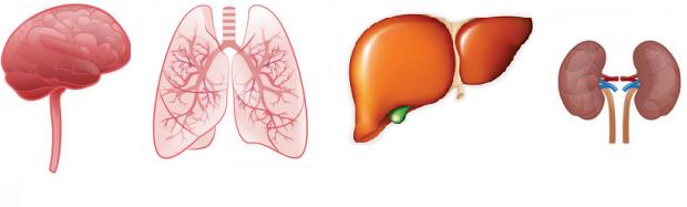 Органы в которых могут появиться метастазы
