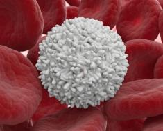 Эритроциты и лейкоцит