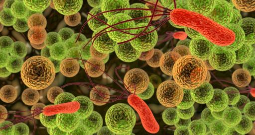 Бактерии и вирусы