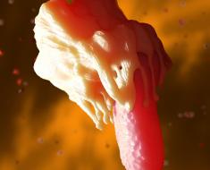 Макрофаг поедает бактерию