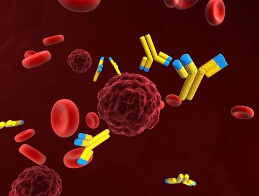 Антигены в иммунной системе